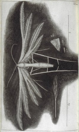 Scheme XXX, thirtieth plate, opposite page 197 in the book, Micrographia: or some physiological Descriptions of minute Bodies made by Magnifying Glasses. With Observations and Inquiries thereupon (London: printed by Jo. Martyn and Ja. Allestry, printers t