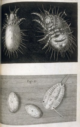 Scheme XXXVI, thirty-sixth plate, opposite page 214 in the book, Micrographia: or some Physiological Descriptions of Minute Bodies made by Magnifying Glasses. with Observations and Inquiries thereupon (London: The Council of the Royal Society of London fo