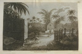 The Tiger Prowling through a Village, pl. 12 in the book, Oriental Field Sports … (London: Edward Orme and B. Crosby and Co., 1808), vol. 1