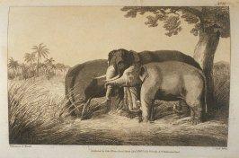 Koomkie, or Decoy Elephants (Catching a Male), pl. 9 in the book, Oriental Field Sports … (London: Edward Orme and B. Crosby and Co., 1808), vol. 1