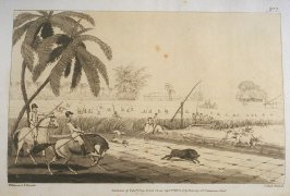 Beating Sugar Canes for a Hog, pl. 2 in the book, Oriental Field Sports … (London: Edward Orme and B. Crosby and Co., 1808), vol. 1