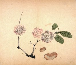 Branch of Chestnuts, No.17 from the Volume on Fruit - from: The Treatise on Calligraphy and Painting of the Ten Bamboo Studio