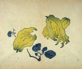Three Buddha's Fingers, No.3 from the Volume on Fruit - from: The Treatise on Calligraphy and Painting of the Ten Bamboo Studio