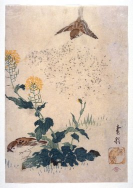 Sparrows and Na Flowers