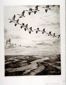 Geese over the Marshes