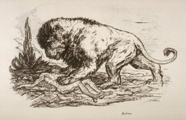 Löwe (Lion), plate 1 from the portfolio Wilde Tiere (Wild Animals)