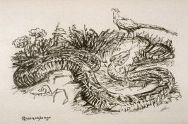 Riesenschlange (Giant Snake), plate 16 from the portfolio Wilde Tiere (Wild Animals)