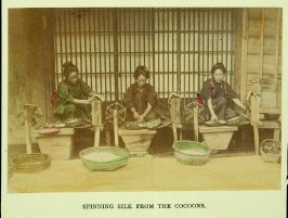Spinning Silk from the Cocoons