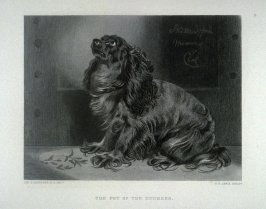 The Pet of the Duchess