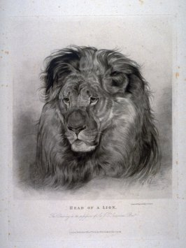 Head of A Lion, from Lewis' Lions - Six Studies of Wild Animals