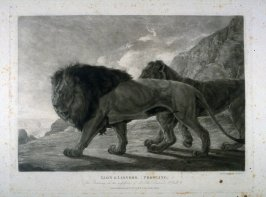 Lion and Lioness, from Lewis' Lions - Six Studies of Wild Animals