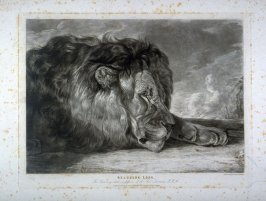 Sleeping Lion, from Lewis' Lions - Six Studies of Wild Animals