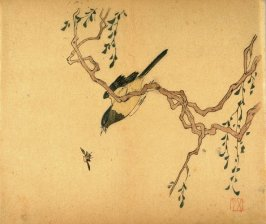 Bird on Wistaria; Insect, No.9 from the Volume on Birds - from: The Treatise on Calligraphy and Painting of the Ten Bamboo Studio