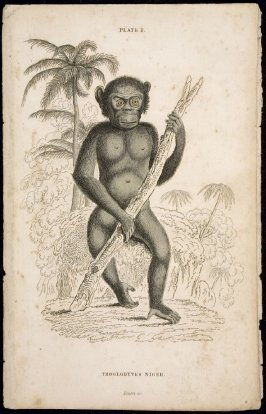 Plate 1, Monkey [Troglodytes Niger] from William Jardine: The Naturalist's Library