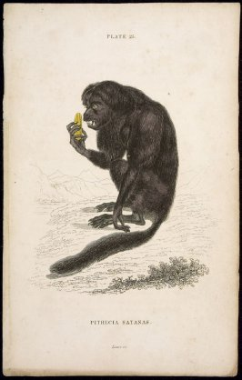 Plate 25, Monkey [Pithecia Satanas] from William Jardine: The Naturalist's Library