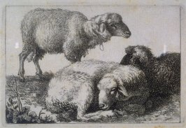 From a set of etchings of Animals and Peasants