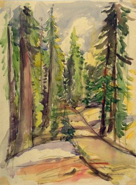 Study : winding road among the redwoods