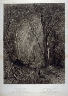 """Beech Trees - One from the Series """"Oestereich's Waldcharakteren"""", Characters of the Forest"""