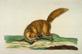 The Fox, illustration to Thomas Pennant's 'The British Zoology' (London: J & J March, London, 1766)