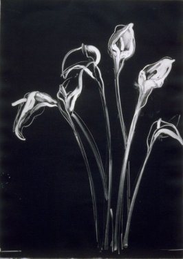 Calla Lily Diptych