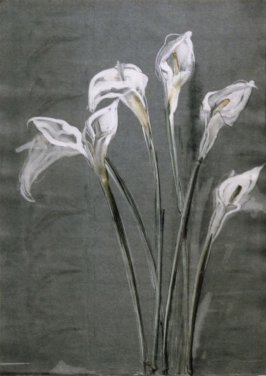 Calla Lily Diptych (cognate)