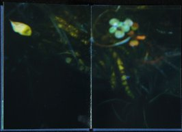 Untitled, seventh double page image in the book Interstice (San Francisco, 2004)