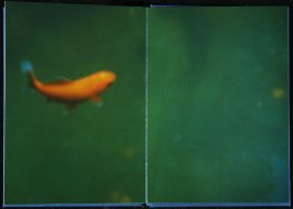 Untitled, tenth double page image in the book Interstice (San Francisco, 2004)