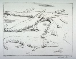One of 12 Etchings of Animals: [Alligator]