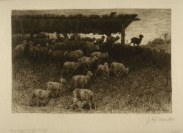 Sheep entering the fold at night