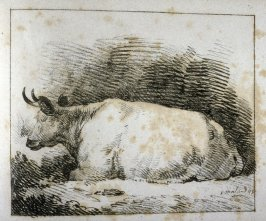 Cow seated, head to left