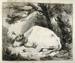 Cow on ground, with chin down