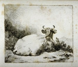 Back view of cow lying on ground, mountain in distance