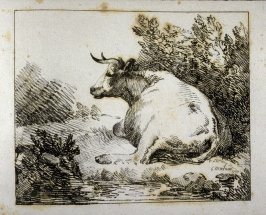 Back view of cow with head erect, by stream