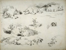 Sheet of soft ground sketches- hogs, goat, sheep, dog head