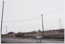 White Horse in Baghdad