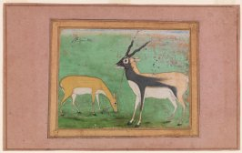 Two Royal Antelopes