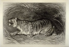 The Tiger, plate 9 in the book, The Etcher (London: Sampson Low…, 1880), vol. 2 [bound in same volume as vol. 1, 1879]