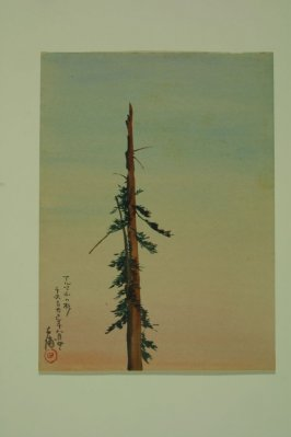 Untitled (redwood tree spire, Alma)