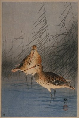 Snipe and Reeds at Water's Edge