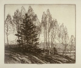 Aspen and Fir (Untitled Landscape Study)