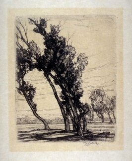 Leaning Willows