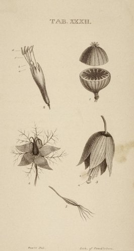 One of Eight book illustrations showing mechanical parts, subjects of zoology and botany