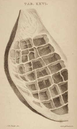 One of Seven more plates from the same work