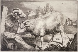 Two Rams, no. 12 from Diversa Animalia Quadrupedia