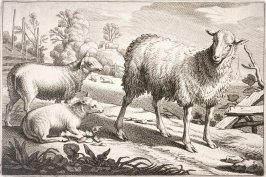 Two Sheep and One Lamb, no. 9 from Diversa Animalia Quadrupedia