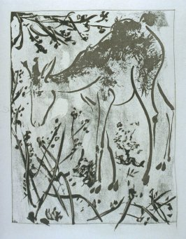 """Le cerf (The Stag),"" in the book Histoire naturelle: Picasso eaux-fortes originales pour les textes de Buffon (Picasso's Original Etchings for Buffon's Text) (Paris: Martin Fabiani, 1942)"
