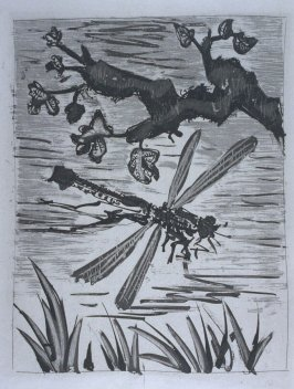 """La libellule (The Dragonfly),"" illustration in the book Histoire naturelle: Picasso eaux-fortes originales pour les textes de Buffon (Picasso's Original Etchings for Buffon's Text) (Paris: Martin Fabiani, 1942)"