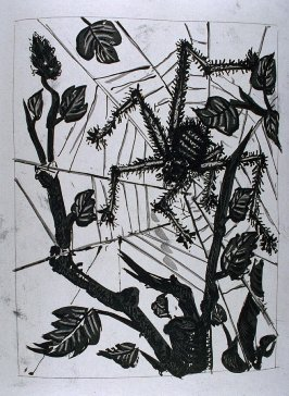 """L'araignée (The Spider),"" in the book Histoire naturelle: Picasso eaux-fortes originales pour les textes de Buffon (Picasso's Original Etchings for Buffon's Text) (Paris: Martin Fabiani, 1942)"