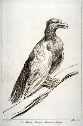 Eagle perching, from the series 'Prints in Imitation of Drawings'