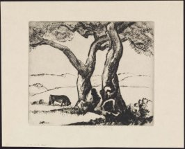 Tree with Bull from the California Landscape Series